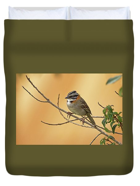 Rufous-collared Sparrow Duvet Cover