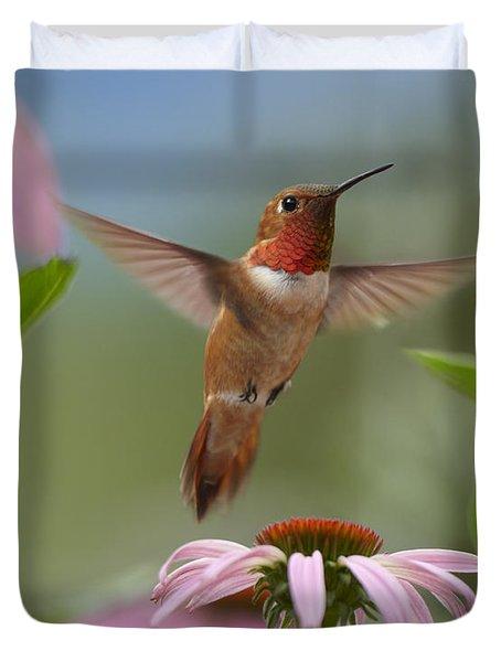 Rufous Hummingbird Male Feeding Duvet Cover