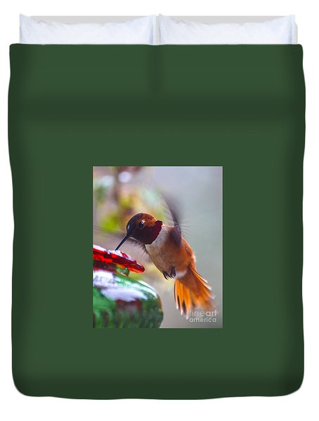 Rufus Hummingbird At The Feeder Duvet Cover