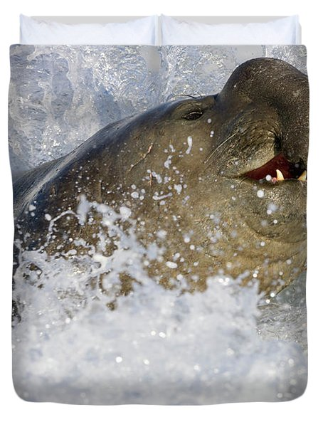 S Elephant Seal In The Surf Duvet Cover
