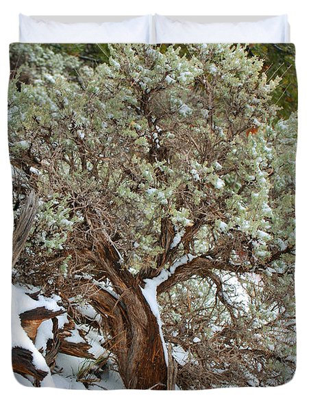 Sage Brush Williams Arizona Duvet Cover by Donna Greene