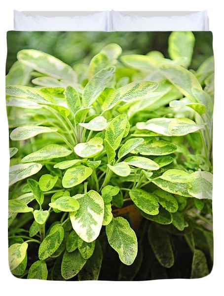 Sage Plant Duvet Cover by Elena Elisseeva