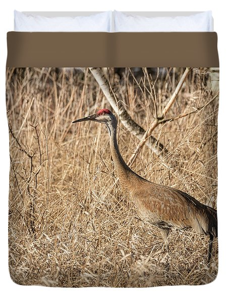 Duvet Cover featuring the photograph Sandhill Crane 2016-7 by Thomas Young