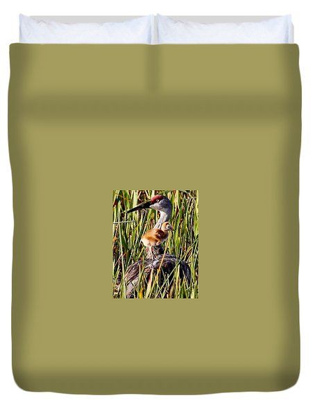 Sandhill Crane And Colt Duvet Cover