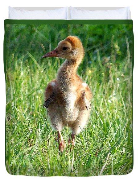 Sandhill Crane Chick 085  Duvet Cover by Chris Mercer