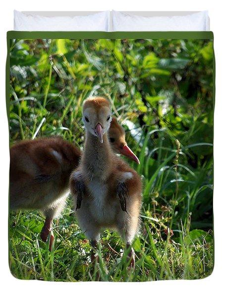 Sandhill Crane Chick 086  Duvet Cover