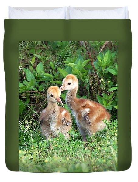 Sandhill Crane Chicks 001 Duvet Cover