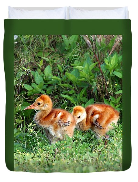 Sandhill Crane Chicks 002 Duvet Cover