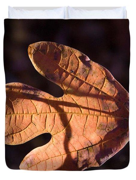Sassafras Leaf In Evening Sun Duvet Cover