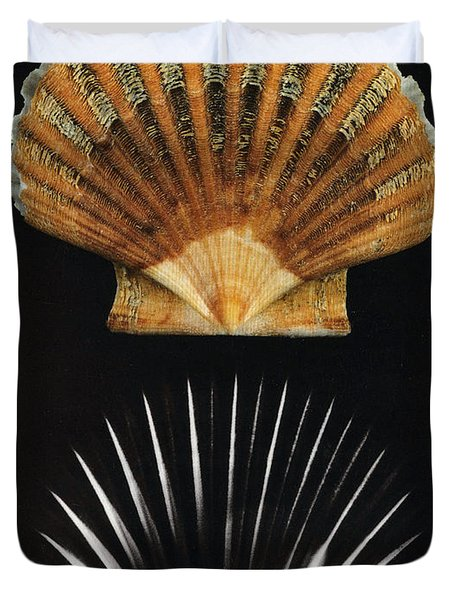 Scallop Shell X-ray Duvet Cover by Photo Researchers