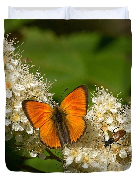 Duvet Cover featuring the photograph Scarce Copper 2 by Jouko Lehto