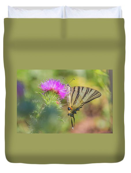 Scarce Swallowtail - Iphiclides Podalirius Duvet Cover