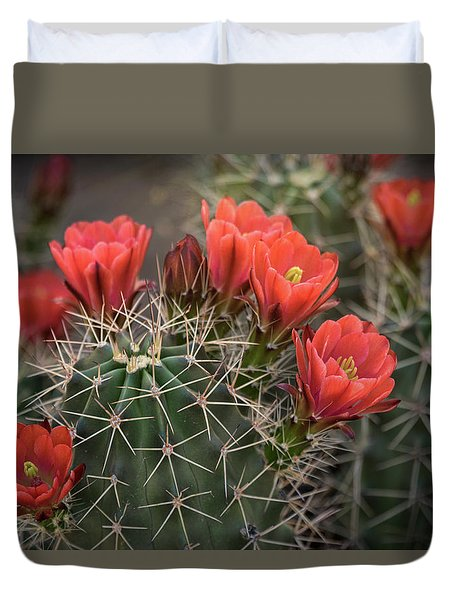 Duvet Cover featuring the photograph Scarlet Hedgehog Cactus  by Saija Lehtonen