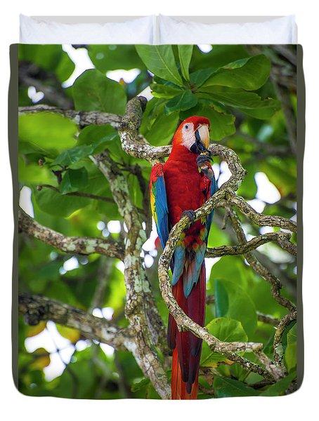 Scarlet Macaw Duvet Cover