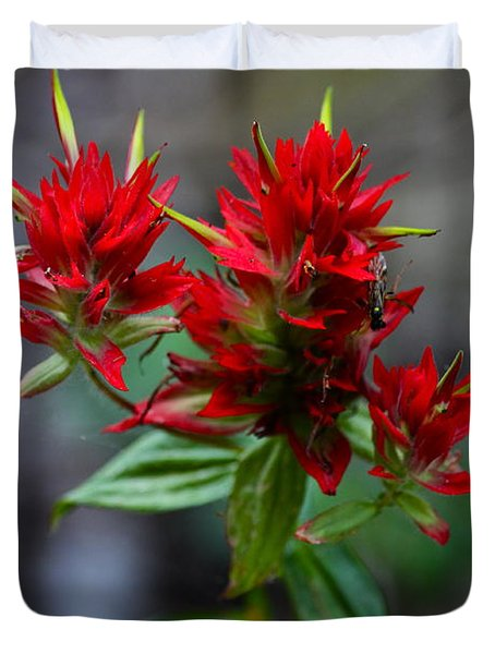 Scarlet Red Indian Paintbrush Duvet Cover