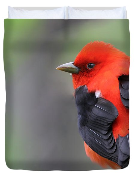 Scarlet Tanager Duvet Cover by Mircea Costina Photography
