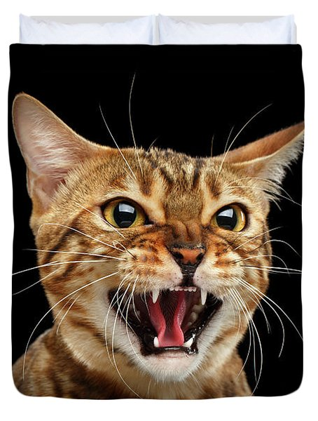 Scary Hissing Bengal Cat On Black Background Duvet Cover