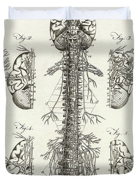 Scientific Diagram Of The Brain And Spinal Column Duvet Cover