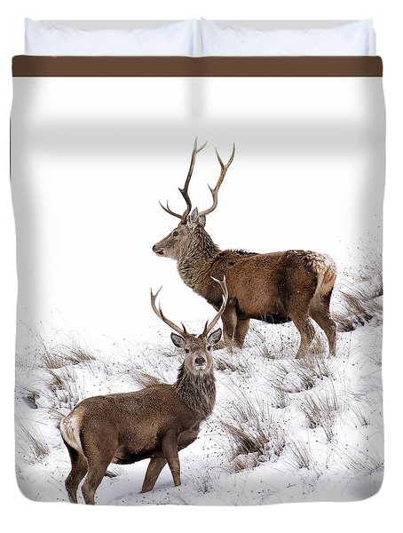 Duvet Cover featuring the photograph Scottish Red Deer Stags by Grant Glendinning