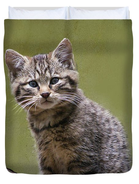 Scottish Wildcat Kitten Duvet Cover