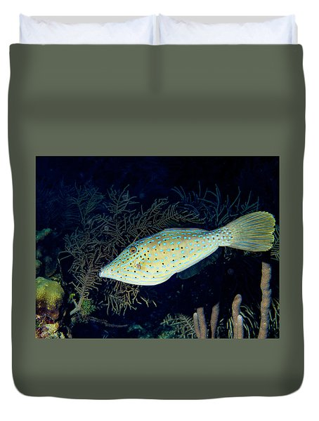 Duvet Cover featuring the photograph Scrawled Filefish by Jean Noren