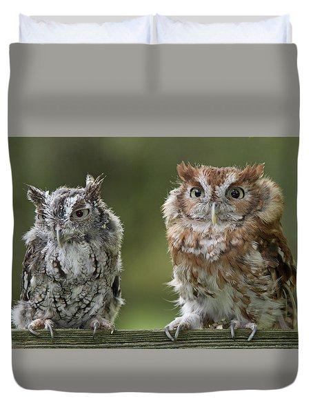 Screech Owl Pair Duvet Cover