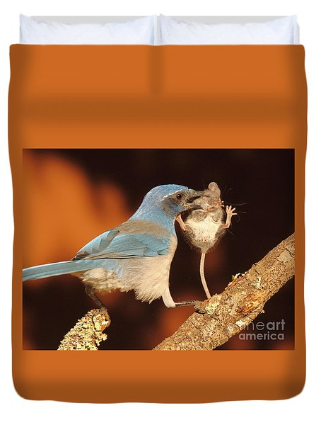 Duvet Cover featuring the photograph Scrub Jay With Jumping Mouse In Grasp by Max Allen