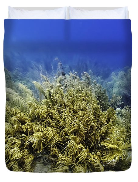 Sea Rod Corals  Duvet Cover