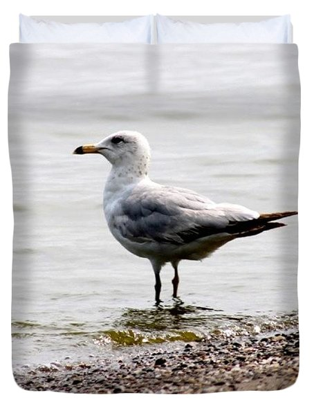 Seagull At Durand Duvet Cover by Justin Connor