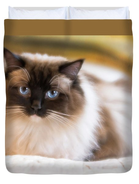Seal Point Bicolor Ragdoll Cat Duvet Cover