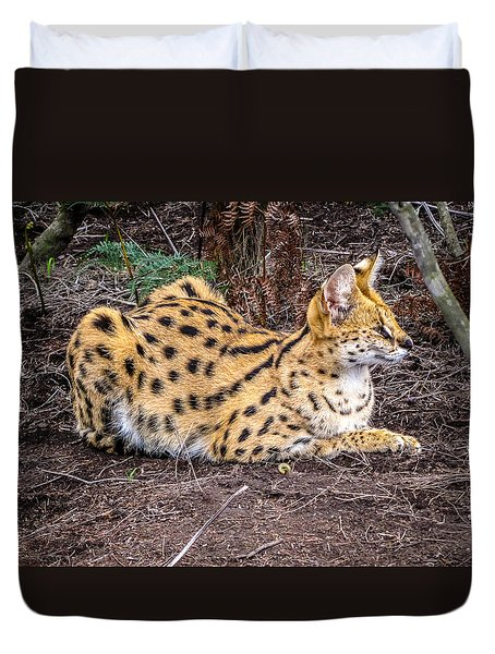 Duvet Cover featuring the photograph Serval On The Prowl by Gregory Daley  PPSA