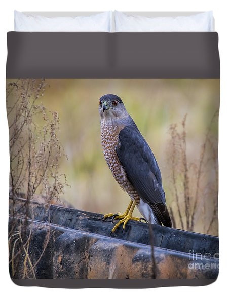 Duvet Cover featuring the photograph Shakerag Coopers Hawk by Barbara Bowen