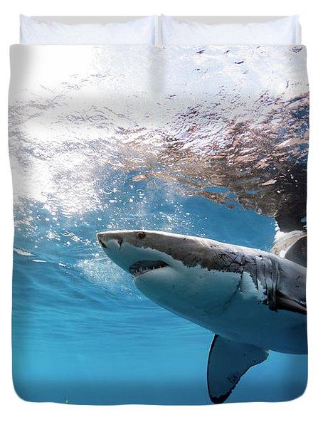 Shark Rays Duvet Cover