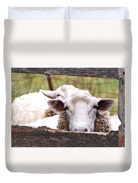 Sheep Friends Duvet Cover