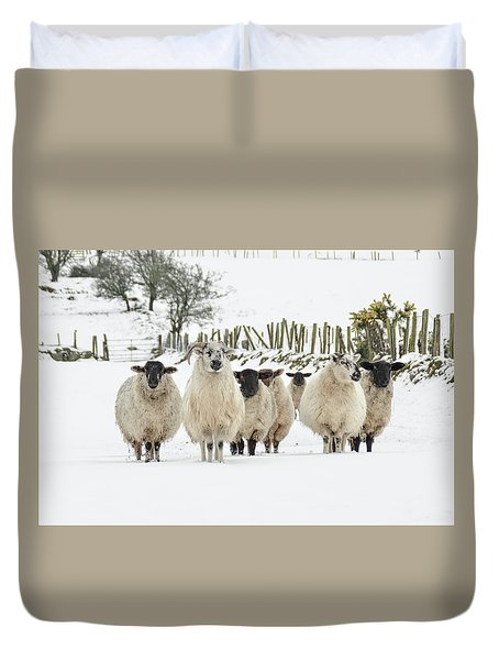 Sheep In Snow Duvet Cover