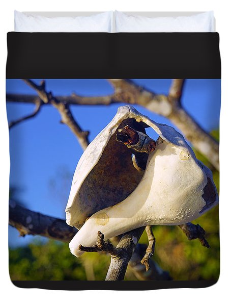 Shell On Brach Of Mangrove Tree At Barefoot Beach In Napes, Fl Duvet Cover