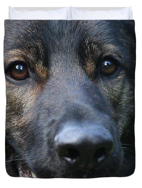 Shepherd Closeup Duvet Cover by Karol Livote