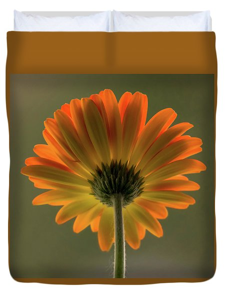 Shine Bright Gerber Daisy Square Duvet Cover by Terry DeLuco