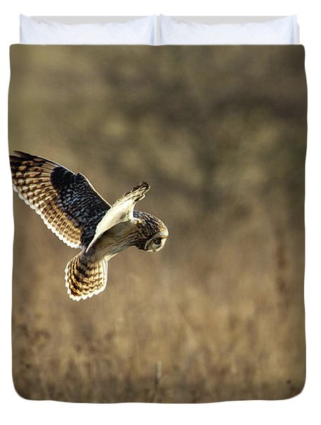 Short-eared Owl About To Strike Duvet Cover