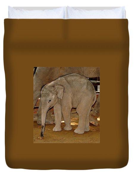 Shy Baby Elephant Duvet Cover