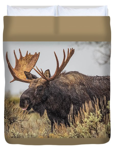 Duvet Cover featuring the photograph Silly Moose  by Kelly Marquardt