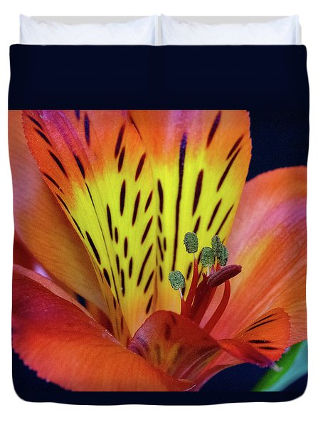 Single Alstroemeria Inca Flower-1 Duvet Cover