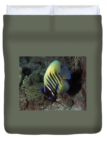 Six Banded Angelfish, Great Barrier Reef Duvet Cover
