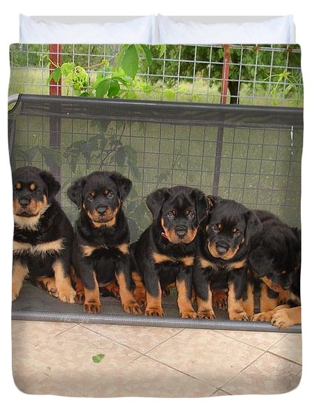 Six Rottweiler Puppies Lined Up On A Swing Duvet Cover by Tracey Harrington-Simpson