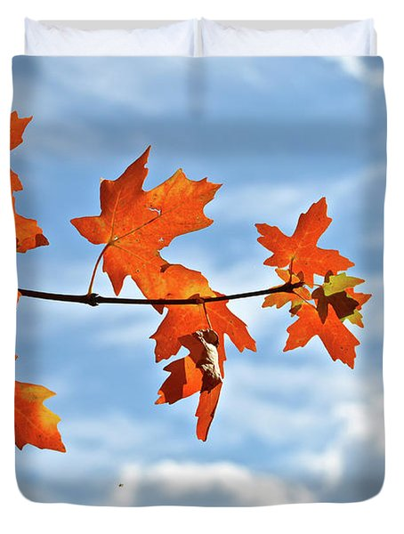 Sky View With Autumn Maple Leaves Duvet Cover