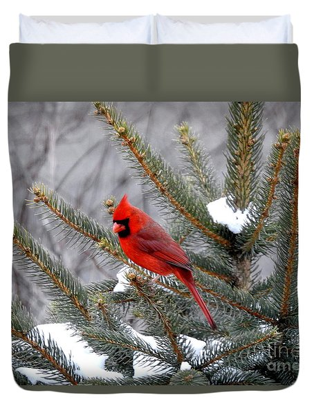 Sleeping Cardinal Duvet Cover by Brenda Bostic