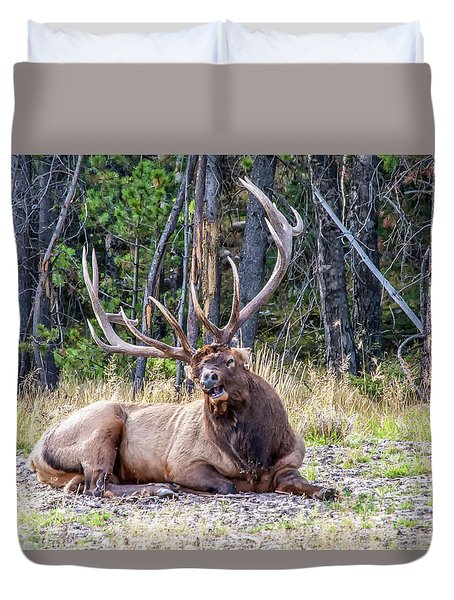 Duvet Cover featuring the photograph Sleepy Elk 2009 01 by Jim Dollar