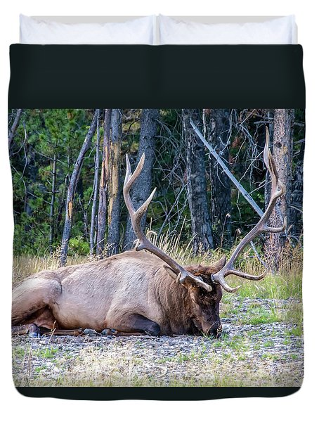 Duvet Cover featuring the photograph Sleepy Elk 2009 02 by Jim Dollar