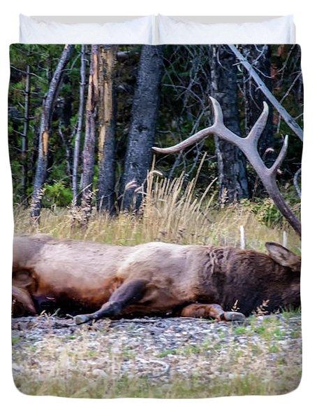 Sleepy Elk 2009 03 Duvet Cover