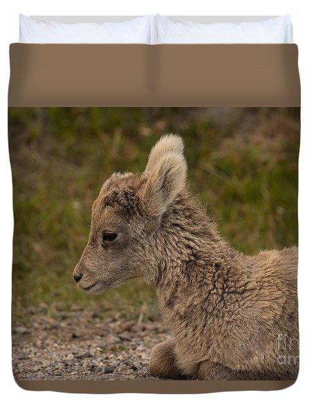 Sleepy Little Lamb Duvet Cover by John Roberts